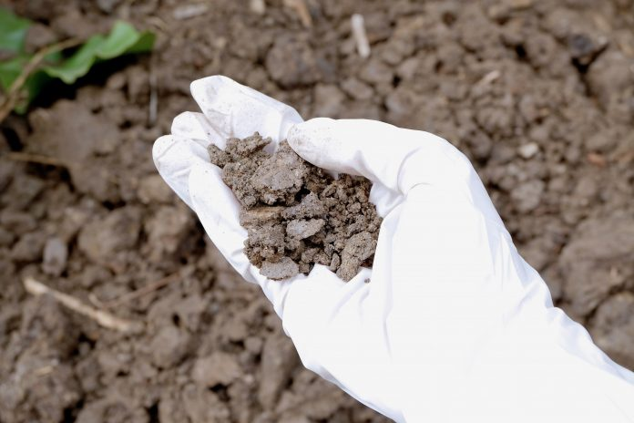 Hand Holding Soil - Soil Remediation